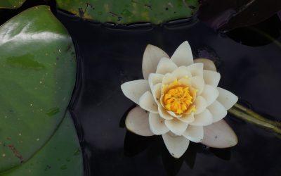 ජය පිරිත පාලි හා සිංහලෙන් Jaya Piritha with Sinhala Translation